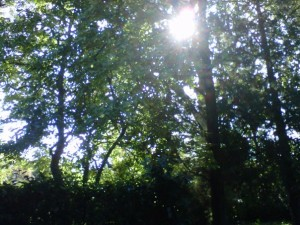 Tree with Sunshine